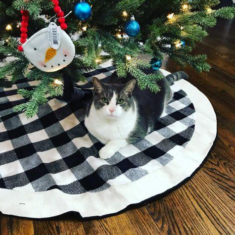 Ms. Kenny-Joness (photogenic) cat, Sydney Jones